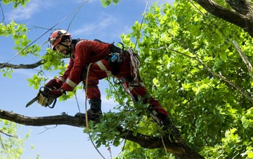 find trusted rated Gwynedd tree surgeons